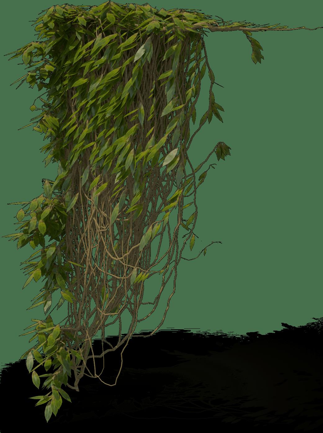 Ivy-Leah-Music