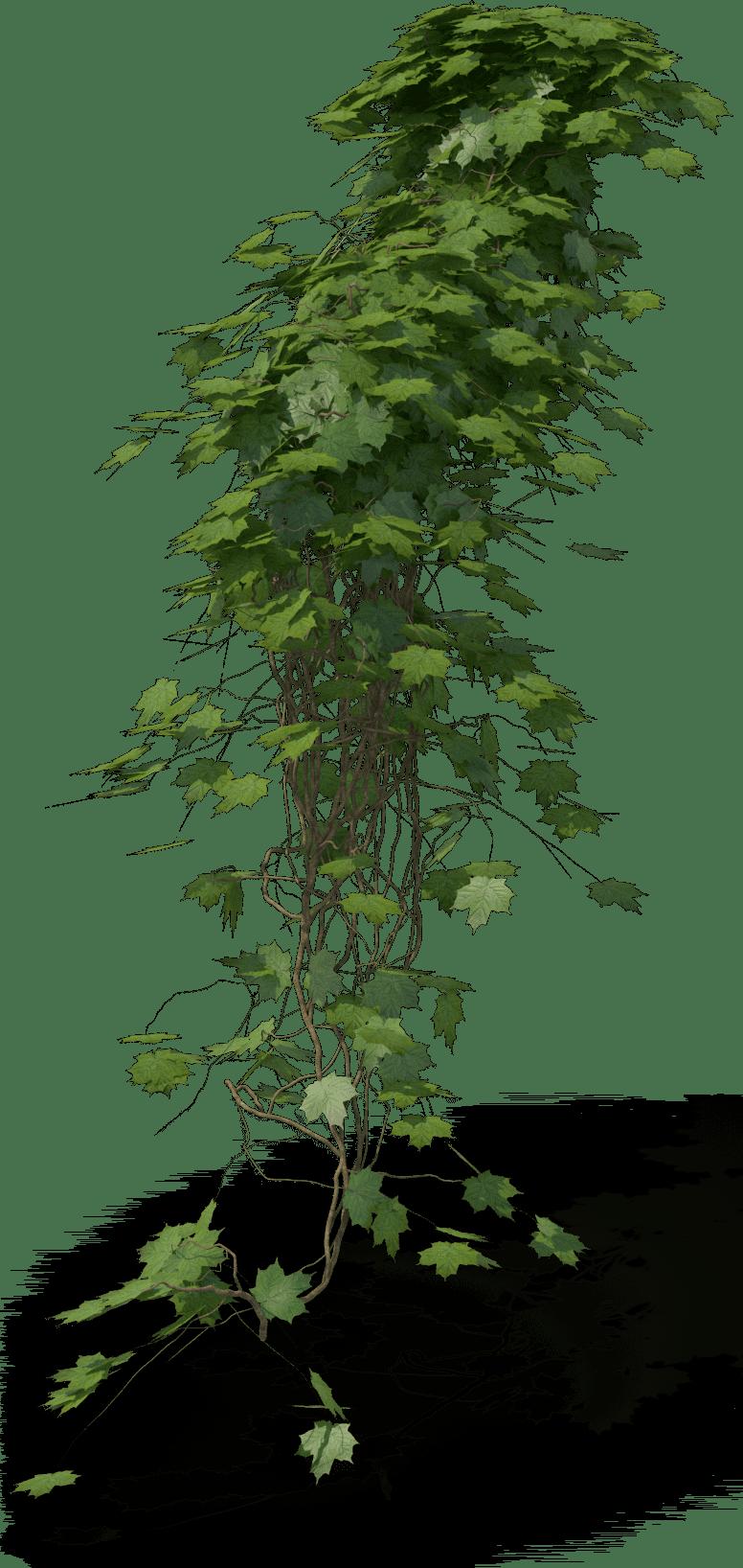Ivy.H14.2k